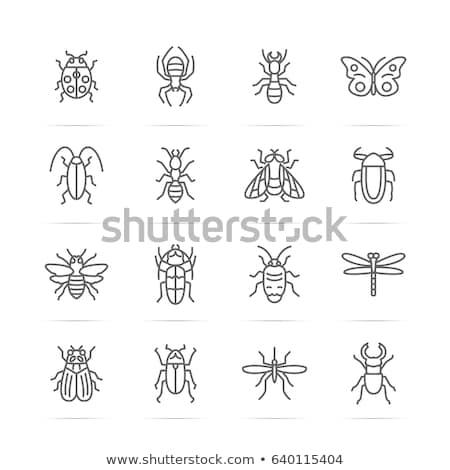 Sivrisinek böcek ikon vektör örnek Stok fotoğraf © pikepicture