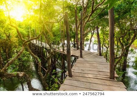 Wooden bridge in flooded rain forest jungle of mangrove Stock photo © dmitry_rukhlenko