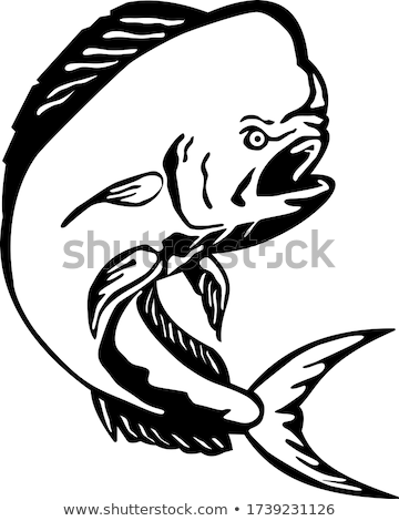 Mahi-mahi Dorado Dolphinfish Jumping Etching Black and White Stock photo © patrimonio