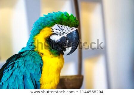 macaw sleeping stock photo © witthaya