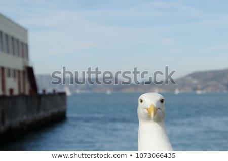 portrait of a seagull  Stock photo © premiere