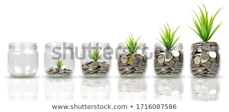 golden coins and green plant isolated on white background stock photo © tetkoren