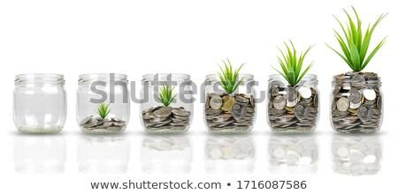 Or pièces vert usine isolé blanche Photo stock © tetkoren