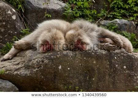 Scimmia dormire cute kid costume nube Foto d'archivio © zsooofija