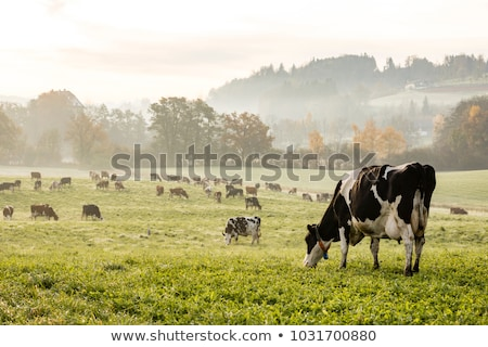 Stock photo: cows and landscape