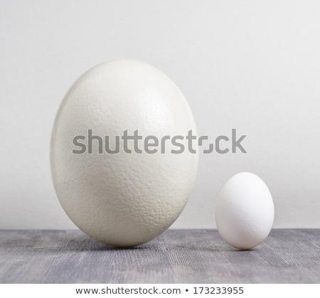 Avestruz frango ovo branco páscoa pássaro Foto stock © pavel_bayshev