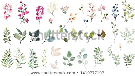 Stock photo: Spring Flower Art With Paint On White