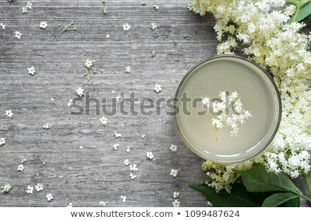 elderflower tea Stock photo © joker