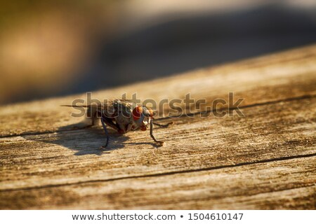 Voar hdr olho asas Foto stock © mobi68