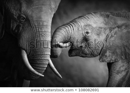 Stockfoto: Elephant Affection Artistic Processing