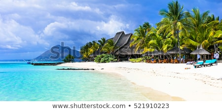 palma · árvores · tropical · praia · vazio · água - foto stock © macropixel