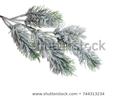 snow on tree branches stock photo © photochecker