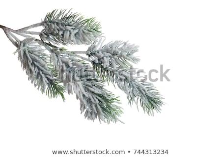 snow on tree branches stock photo © photochecker