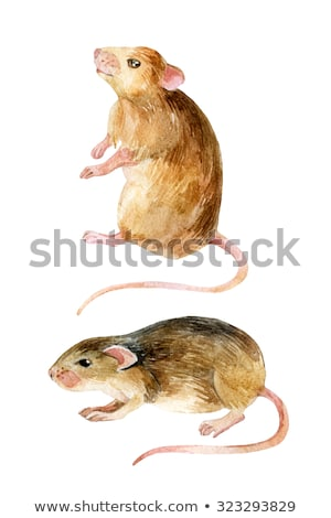 Field Mouse Watercolor Stock photo © AlienCat