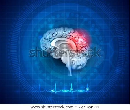 Cervello cervello umano sangue simbolo rosso Foto d'archivio © Lightsource