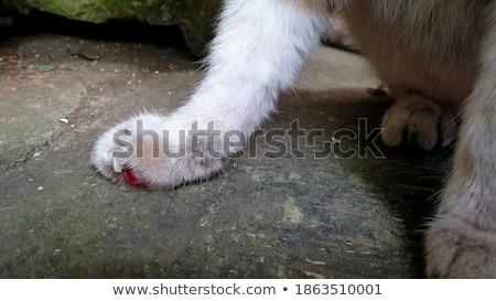 Yırtılmış kanama cilt hasar kan Stok fotoğraf © 2tun