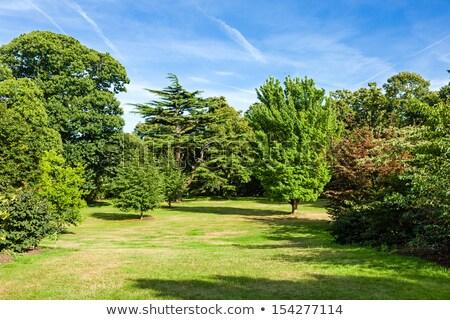 Hermosa exuberante verde parque jardín sol Foto stock © scheriton