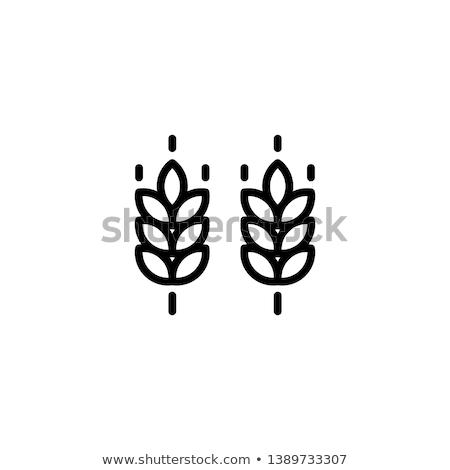 Buğday kulaklar un tok Stok fotoğraf © Lynx_aqua