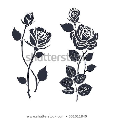 белый роз черный романтические вектора Сток-фото © ElaK