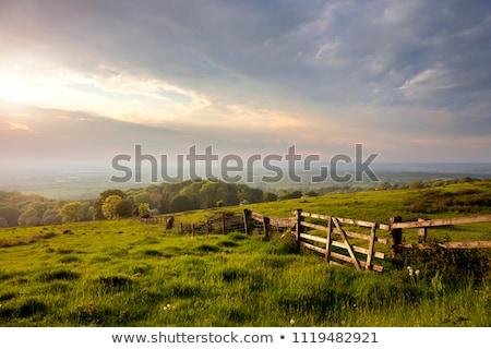 tehenek · birka · testtartás · tájkép · tehén · mező - stock fotó © hofmeester