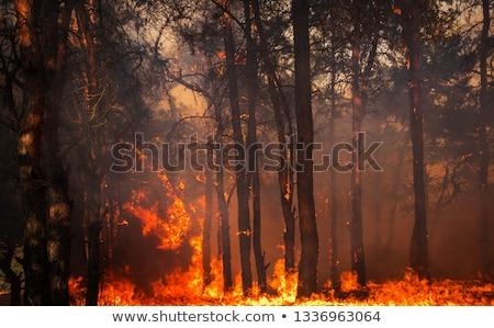 Fogo pinho floresta paisagem árvore preto Foto stock © Andriy-Solovyov