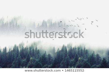 Stock photo: trees in mist