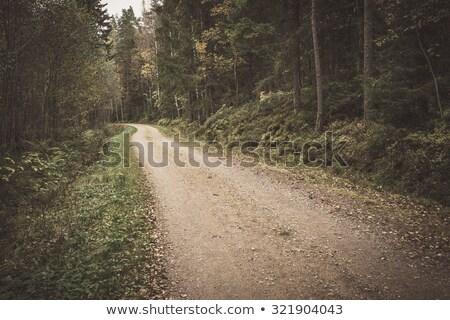 Vidéki kicsi kavicsút Finnország erdő út Stock fotó © Juhku