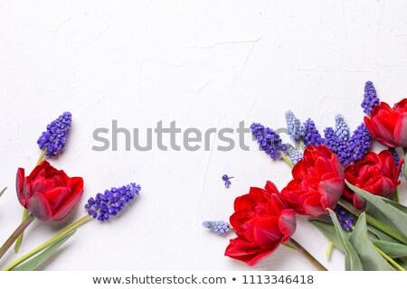 Liefde tekst Rood witte Blauw abstract Stockfoto © x7vector