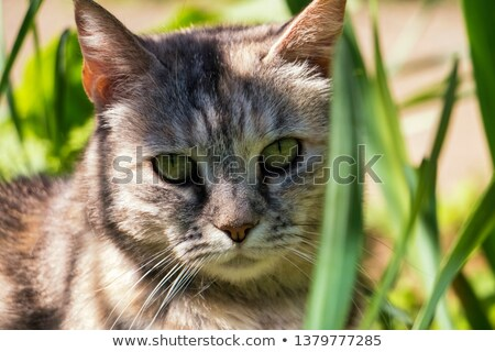 cute · chat · jardin · printemps · visage · herbe - photo stock © meinzahn