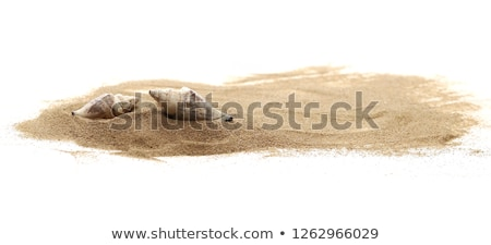 conch shell on sand Stock photo © Hofmeester