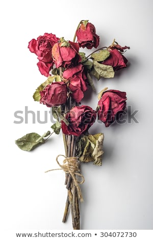 bouquet of dried roses Stock photo © olykaynen