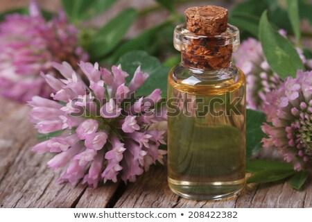 vermelho · trevo · erva · flores · flor · monte - foto stock © marimorena