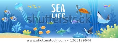 Stock fotó: Meduza · úszik · tenger · illusztráció · tájkép · háttér
