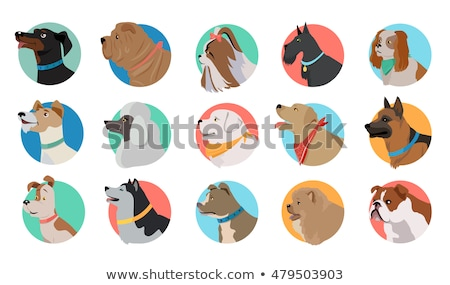 Animals pets vector flat round icons set stock photo © vectorikart