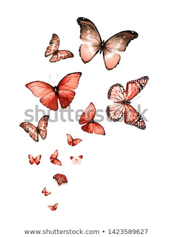 Flying butterflies morpho and monarch Stock photo © blackmoon979
