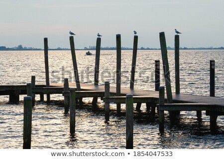 Wooden jetty , boats and seagulls Stock photo © Hofmeester