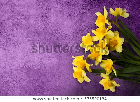 Stock fotó: March 8 Greeting Card Template Violet Flower On Yellow Background