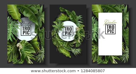 green background with leaf frame vector Stock photo © SArts