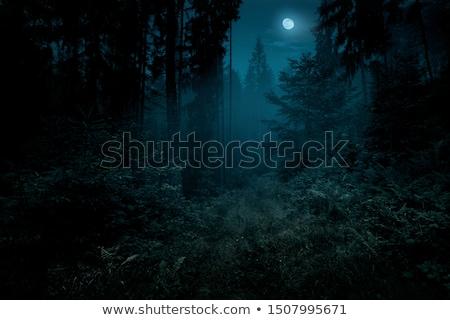 Stock fotó: Erdő · hold · éjszaka · fenyőfa · fák · felhők