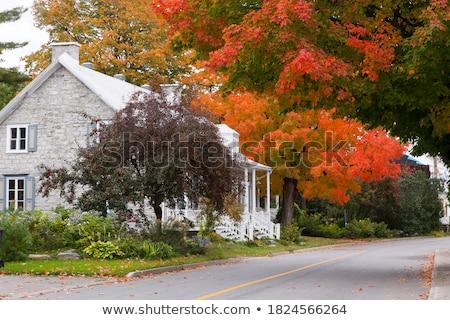 érable arbres rue saison d'automne automne feuillage Photo stock © davidgn