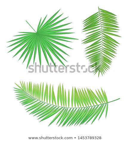 Palm Branch Set Long Round Leaves with Sharp Edges Stock photo © robuart