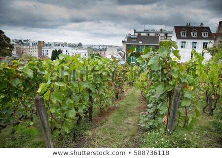 Híres szőlőskert Montmartre Párizs turista tájékozódási pont Stock fotó © vapi