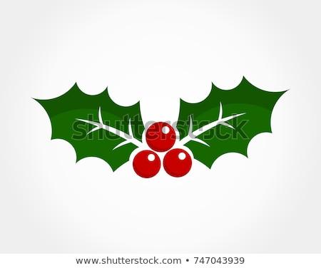 Jemioła roślin symboliczny obraz christmas wakacje Zdjęcia stock © robuart