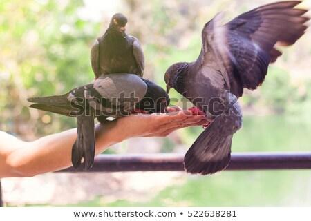 Jelenet madarak erkély illusztráció fal tájkép Stock fotó © colematt