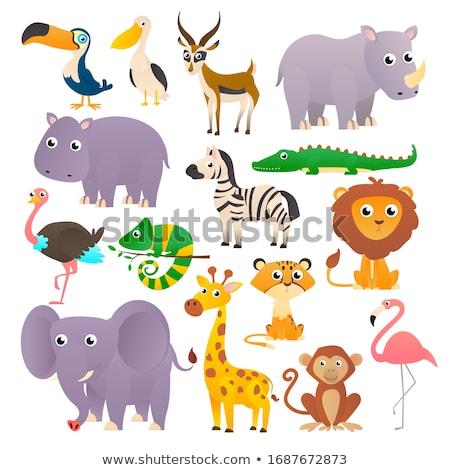 Afrikai állat aranyos vicces zebra ikon Stock fotó © MarySan