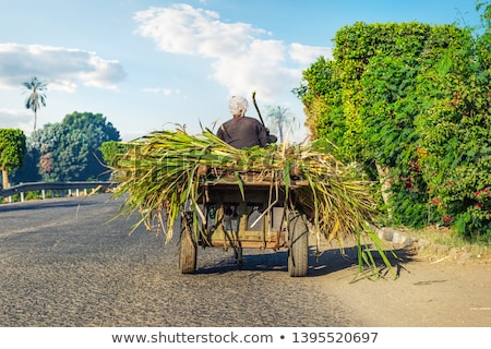 Egyptian peasant in a cart Stock photo © Givaga