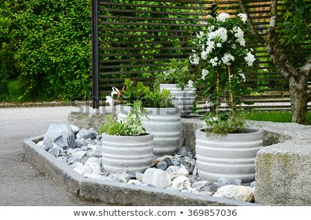 Bloem groeiend pot flora decoratie Stockfoto © robuart