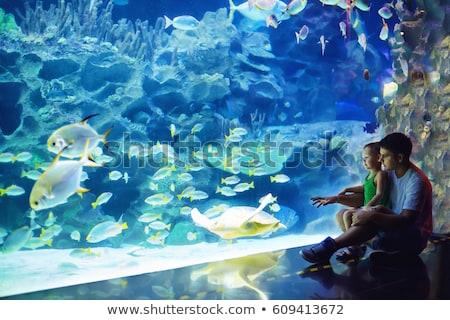 Apa fia néz hal alagút akvárium nő Stock fotó © galitskaya