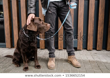 Young man in black jeans touching head og his cute brown pet during chill Stock photo © pressmaster