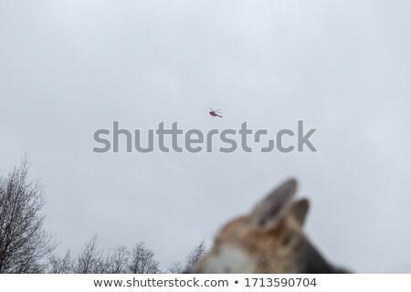 Azul helicóptero vuelo gris cielo velocidad Foto stock © tilo